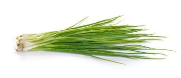 Zielona cebula odizolowywająca na białym tle zdjęcie stock