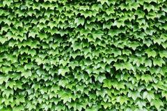 zielona ściana Obraz Royalty Free