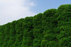zielona ściana Zdjęcia Royalty Free