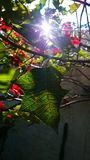 zielona czerwony Obrazy Stock