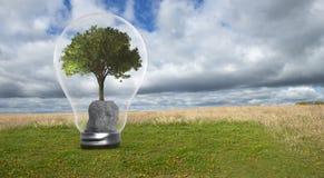 Zielona czysta energia, środowisko, natura, żarówka obraz royalty free