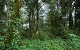 Zielona dżungla z drzewnym tropikalnym lasem deszczowym i mgłą Fotografia Royalty Free