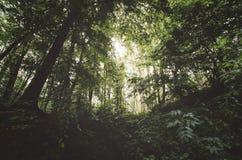 Zielona dżungli scena z luksusową roślinnością Fotografia Stock