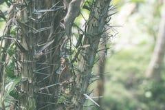 Zielona dżungla na Bali wyspie, Indonezja Tropikalna tropikalny las deszczowy scena Fotografia Stock