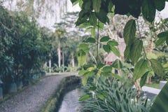 Zielona dżungla na Bali wyspie, Indonezja Tropikalna tropikalny las deszczowy scena Obrazy Royalty Free