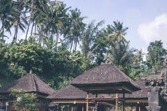 Zielona dżungla na Bali wyspie, Indonezja Tropikalna tropikalny las deszczowy scena Zdjęcia Stock