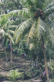 Zielona dżungla na Bali wyspie, Indonezja Tropikalna tropikalny las deszczowy scena Fotografia Royalty Free