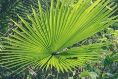 Zielona dżungla na Bali wyspie, Indonezja Tropikalna tropikalny las deszczowy scena Obraz Stock