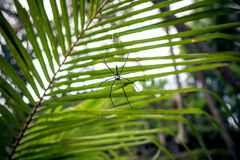 Zielona dżungla na Bali wyspie, Indonezja Tropikalna tropikalny las deszczowy scena Zdjęcie Stock