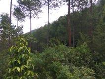 zielona dżungli Obraz Stock