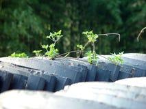 Zielona dachowa płytka Fotografia Stock