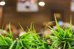 zielona dekoracyjna trawa zasadzająca w garnkach w ogródzie blisko kawiarni w nowożytnym Europejskim mieście obraz royalty free