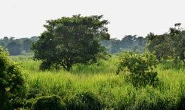 zielona dolina Obrazy Stock