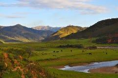 zielona dolina Zdjęcia Royalty Free