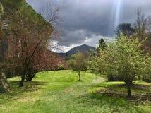 Zielona dolina w ogródzie Ninfa, Włochy zdjęcia royalty free