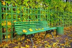Zielona drewniana ławka z kolory żółci spadać liśćmi i łzawicą w Su Obrazy Stock