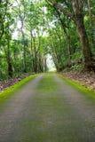 Zielona droga i zieleni drzewo w lesie Zdjęcie Stock