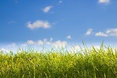 Zielona dzika trawa na nieba tle - wizerunek z kopii przestrzenią zdjęcie stock