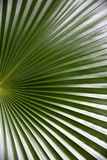 zielona fala Obrazy Stock