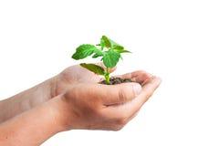 Zielona flanca w rękach Fotografia Royalty Free