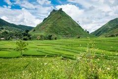 Zielona góra na ryżu polu tarasującym Obraz Royalty Free