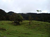 Zielona góra z drzewami pod niebem Fotografia Stock