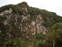 Zielona góra z drzewami pod niebem Zdjęcia Stock