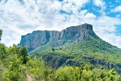 Zielona góra z lasem Zdjęcia Stock