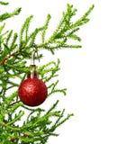 Zielona gałąź dekoracyjna domowa sosna z czerwonymi bożymi narodzeniami Zdjęcia Royalty Free