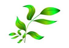 Zielona gałąź z liśćmi eps Soczyści krótkopędy młodzi drzewa Gałąź z liśćmi royalty ilustracja