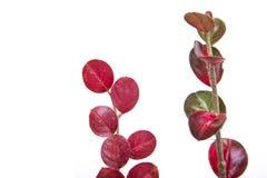 Zielona gałąź z liścia wyborem od łąki w spadku Jesień scena Obraz Royalty Free