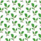 zielona gałązka wzór Obrazy Royalty Free
