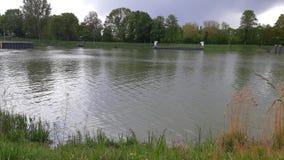 Zielona gras natura przy rzeki strony wodą obraz stock