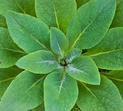 zielona gwiazda Obrazy Stock