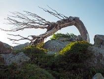 Zielona halna łąka z pastwiskowymi koniami na skale i niebieskim niebie zdjęcie stock