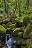 zielona Hawaii dżungli obraz royalty free