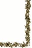 zielona herbata granic Fotografia Royalty Free
