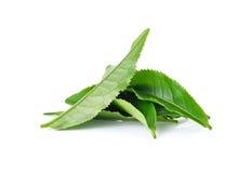 zielona herbata liści, Obrazy Royalty Free