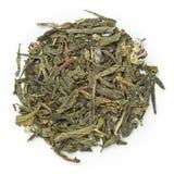 Zielona herbata Sencha Kombucha Obrazy Royalty Free