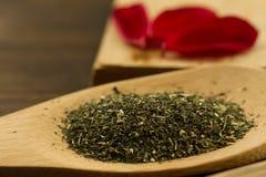 Zielona herbata w drewnianej łyżce na tle stary rocznik rezerwuje Fotografia Royalty Free