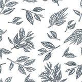Zielona herbata wektoru bezszwowy wzór Kreśli ręka rysującą ilustrację liście i gałąź ilustracja wektor