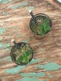 Zielona herbata z mennicą, świeżą Zdjęcia Stock