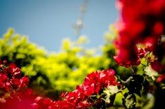 Zielona i czerwona roślinność przeciw niebieskiemu niebu zdjęcia royalty free
