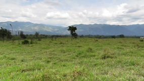 Zielona i naturalna łąka obrazy royalty free