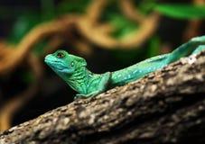 zielona jaszczurka Zdjęcie Stock