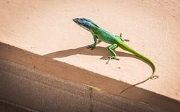 Zielona jaszczurka Zdjęcia Royalty Free