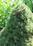 Zielona jaszczurka zwierzęta fotografia royalty free
