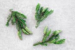 Zielona jodła rozgałęzia się z rożkami obraz stock