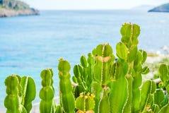 Zielona kłująca bonkreta na tle morze, zakończenie Obrazy Royalty Free