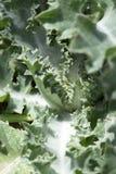 Zielona kłująca roślina w naturze Obrazy Royalty Free